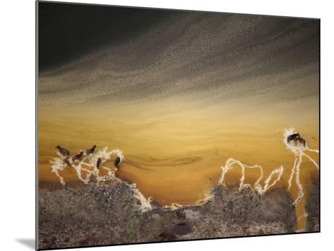 Water buffalo and mineral deposits along the shore of a crater lake.-Joel Sartore-Mounted Photographic Print