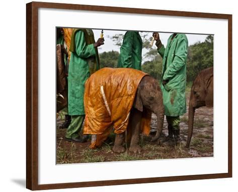 Keepers Protect a Baby Elephant From the Cold and Rain With a Custom-Made Raincoat-Michael Nichols-Framed Art Print