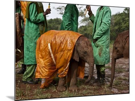 Keepers Protect a Baby Elephant From the Cold and Rain With a Custom-Made Raincoat-Michael Nichols-Mounted Photographic Print