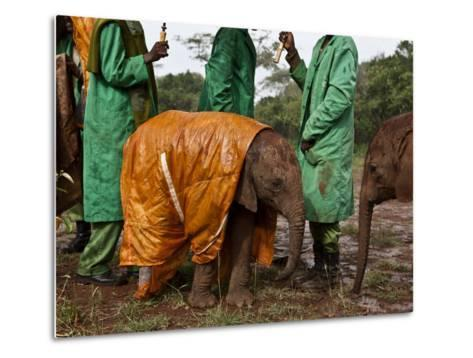 Keepers Protect a Baby Elephant From the Cold and Rain With a Custom-Made Raincoat-Michael Nichols-Metal Print