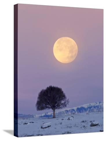 A Full Moon Rising over a Single Tree on a Snowy Hill-Robbie George-Stretched Canvas Print