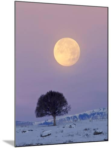 A Full Moon Rising over a Single Tree on a Snowy Hill-Robbie George-Mounted Photographic Print