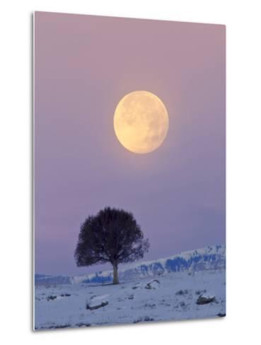 A Full Moon Rising over a Single Tree on a Snowy Hill-Robbie George-Metal Print