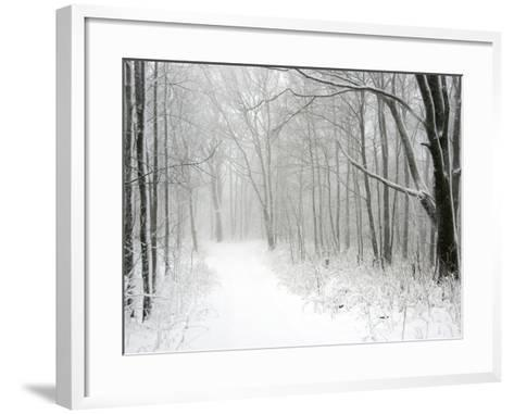 Trees Line a Snow-Covered Road Through a Forest-Amy & Al White & Petteway-Framed Art Print