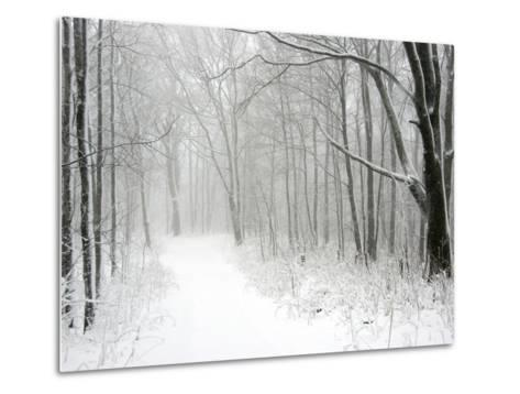 Trees Line a Snow-Covered Road Through a Forest-Amy & Al White & Petteway-Metal Print
