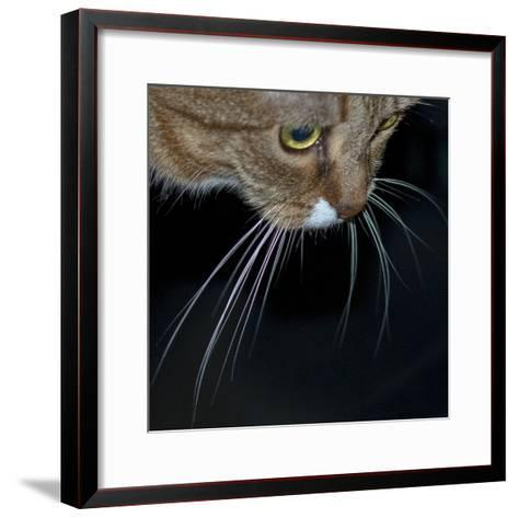 Close Up of a Pet Cat's Face and Whiskers-Amy & Al White & Petteway-Framed Art Print