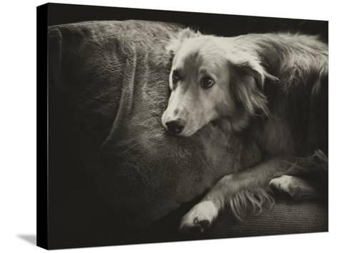 Antiqued Black and White Portrait of a Pet Dog-Amy & Al White & Petteway-Stretched Canvas Print