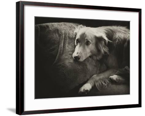 Antiqued Black and White Portrait of a Pet Dog-Amy & Al White & Petteway-Framed Art Print