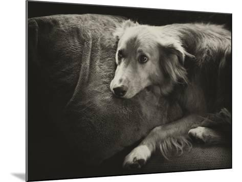 Antiqued Black and White Portrait of a Pet Dog-Amy & Al White & Petteway-Mounted Photographic Print