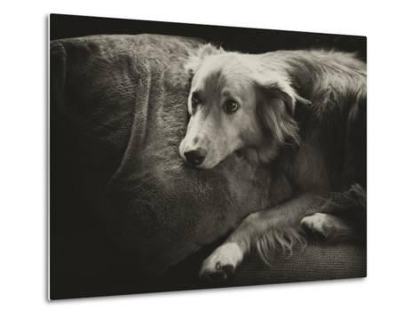 Antiqued Black and White Portrait of a Pet Dog-Amy & Al White & Petteway-Metal Print