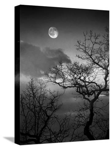 A Nearly Full Moon Sets over the Blue Ridge Mountains at Dawn-Amy & Al White & Petteway-Stretched Canvas Print