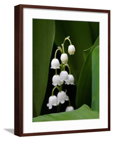 Close Up of Delicate Lily of the Valley Flowers-Amy & Al White & Petteway-Framed Art Print