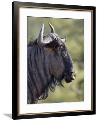 Blue Wildebeest (Brindled Gnu) (Connochaetes Taurinus), Imfolozi Game Reserve, South Africa, Africa-James Hager-Framed Art Print