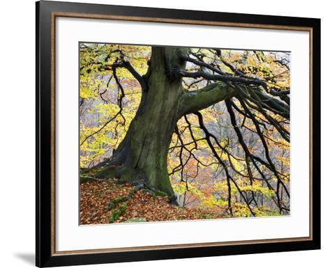 Autumn Tree, Bolton Abbey, Yorkshire, England, United Kingdom, Europe-Mark Sunderland-Framed Art Print