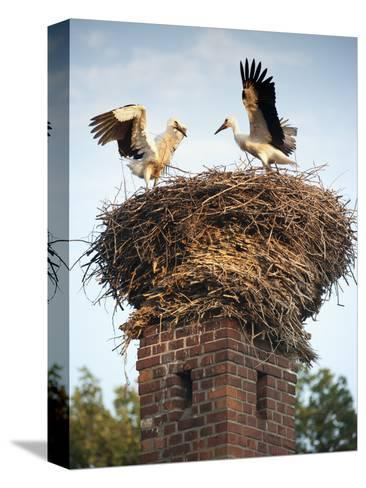 Storks on Top of Chimney in Town of Lenzen, Brandenburg, Germany, Europe-Richard Nebesky-Stretched Canvas Print