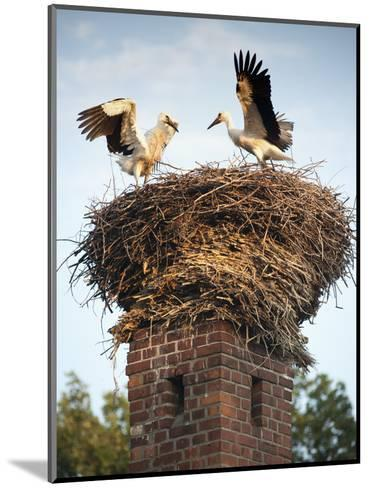 Storks on Top of Chimney in Town of Lenzen, Brandenburg, Germany, Europe-Richard Nebesky-Mounted Photographic Print