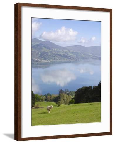 Otago Harbour, Otago Peninsula, Otago, South Island, New Zealand, Pacific-Michael Snell-Framed Art Print
