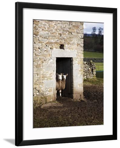 Two Sheep in a Field Barn Near Aysgarth, Yorkshire Dales, England, United Kingdom, Europe-Mark Sunderland-Framed Art Print