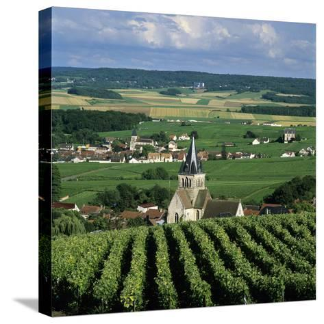 Champagne Vineyards, Ville-Dommange, Near Reims, Champagne, France, Europe-Stuart Black-Stretched Canvas Print