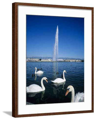 Swans Below the Jet D'Eau (Water Jet), Geneva, Lake Geneva (Lac Leman), Switzerland, Europe-Stuart Black-Framed Art Print