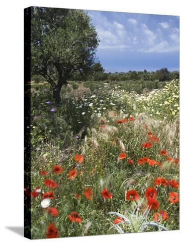 Spring Flowers, Akrotiri Peninsula, Chania Region, Crete, Greek Islands, Greece, Europe-Stuart Black-Stretched Canvas Print