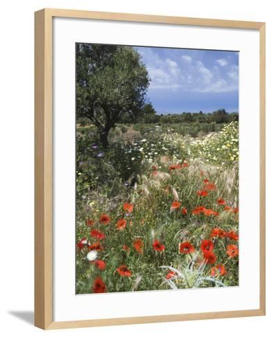Spring Flowers, Akrotiri Peninsula, Chania Region, Crete, Greek Islands, Greece, Europe-Stuart Black-Framed Art Print
