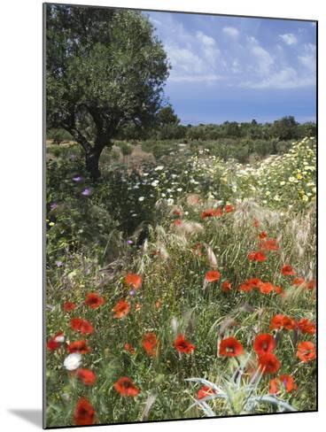Spring Flowers, Akrotiri Peninsula, Chania Region, Crete, Greek Islands, Greece, Europe-Stuart Black-Mounted Photographic Print