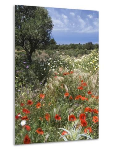 Spring Flowers, Akrotiri Peninsula, Chania Region, Crete, Greek Islands, Greece, Europe-Stuart Black-Metal Print