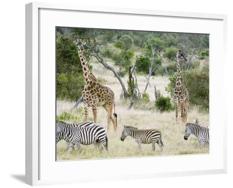 Zebras and Giraffes, Masai Mara, Kenya, Africa-Daniel Schreiber-Framed Art Print