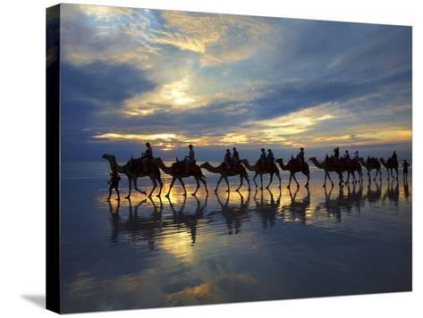 Tourist Camel Train on Cable Beach at Sunset, Broome, Kimberley Region, Western Australia-David Wall-Stretched Canvas Print