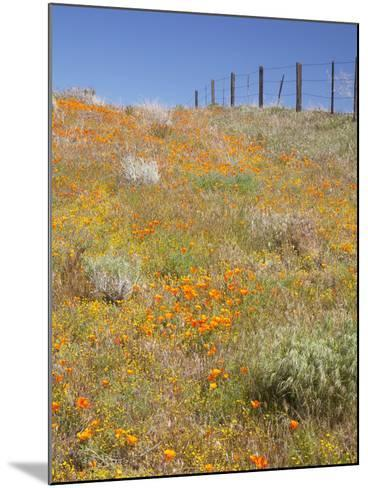 Poppy and Goldfield Flowers with Fence, Antelope Valley Near Lancaster, California, Usa-Jamie & Judy Wild-Mounted Photographic Print