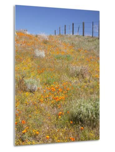 Poppy and Goldfield Flowers with Fence, Antelope Valley Near Lancaster, California, Usa-Jamie & Judy Wild-Metal Print
