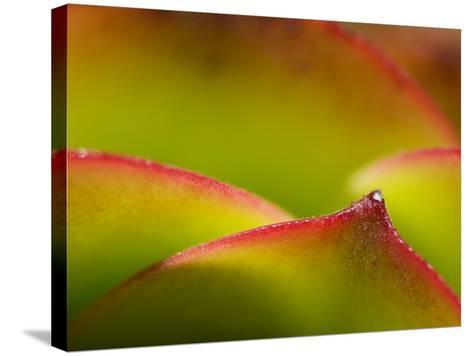 Floral Abstract, California, Usa-Paul Colangelo-Stretched Canvas Print