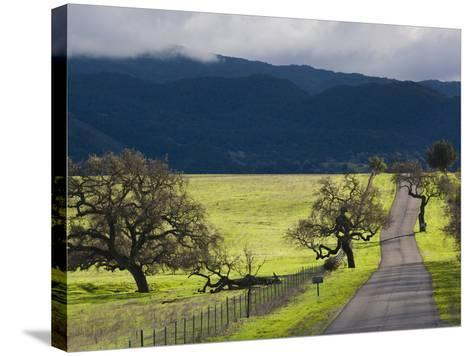 Trees and Country Road, Santa Barbara Wine Country, Santa Ynez, Southern California, Usa-Walter Bibikow-Stretched Canvas Print