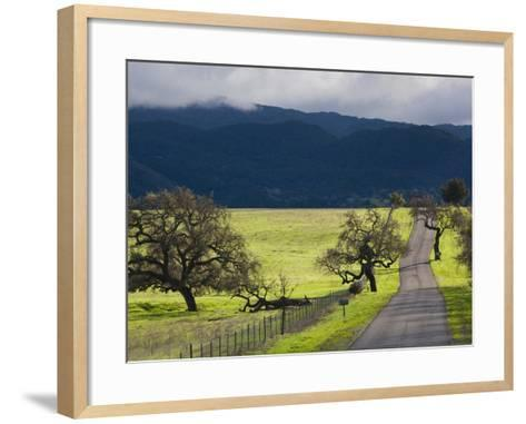 Trees and Country Road, Santa Barbara Wine Country, Santa Ynez, Southern California, Usa-Walter Bibikow-Framed Art Print