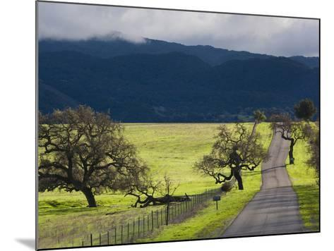 Trees and Country Road, Santa Barbara Wine Country, Santa Ynez, Southern California, Usa-Walter Bibikow-Mounted Photographic Print