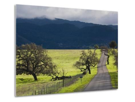 Trees and Country Road, Santa Barbara Wine Country, Santa Ynez, Southern California, Usa-Walter Bibikow-Metal Print