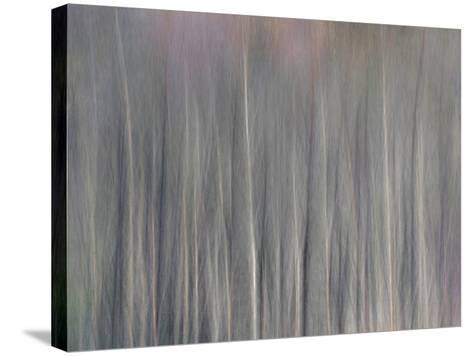 Abstract Tree Pattern, Great Smoky Mountains National Park, North Carolina, Usa-Adam Jones-Stretched Canvas Print