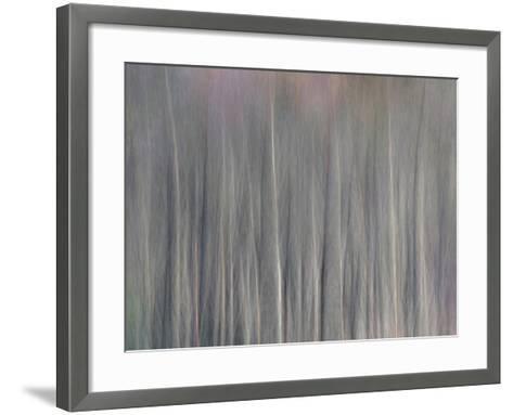 Abstract Tree Pattern, Great Smoky Mountains National Park, North Carolina, Usa-Adam Jones-Framed Art Print