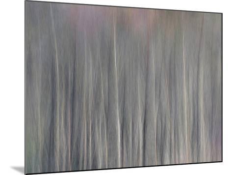 Abstract Tree Pattern, Great Smoky Mountains National Park, North Carolina, Usa-Adam Jones-Mounted Photographic Print