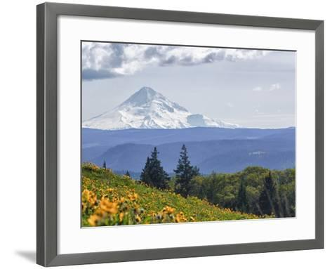 Mt. Hood from Mccall Point, Tom Mccall Nature Preserve, Columbia Gorge, Oregon, Usa-Rick A^ Brown-Framed Art Print
