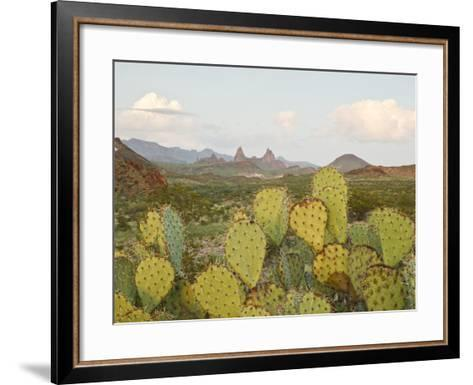 Mule Ears and Prickly Pear Cactus, Chisos Mountains, Big Bend National Park, Brewster Co., Texas, U-Larry Ditto-Framed Art Print