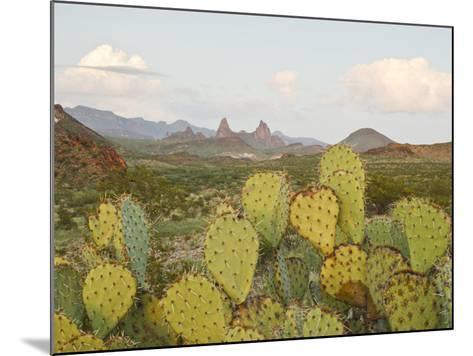Mule Ears and Prickly Pear Cactus, Chisos Mountains, Big Bend National Park, Brewster Co., Texas, U-Larry Ditto-Mounted Photographic Print