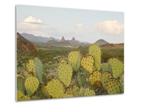 Mule Ears and Prickly Pear Cactus, Chisos Mountains, Big Bend National Park, Brewster Co., Texas, U-Larry Ditto-Metal Print