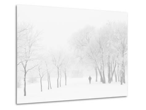 Winter, Saint Petersburg, Russia-Nadia Isakova-Metal Print
