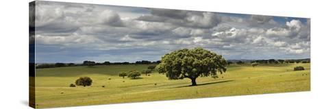 Holm Oaks in the Vast Plains of Alentejo, Portugal-Mauricio Abreu-Stretched Canvas Print