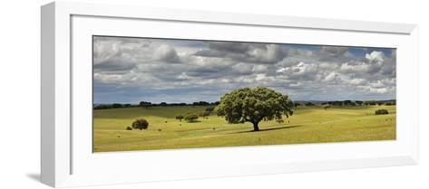 Holm Oaks in the Vast Plains of Alentejo, Portugal-Mauricio Abreu-Framed Art Print