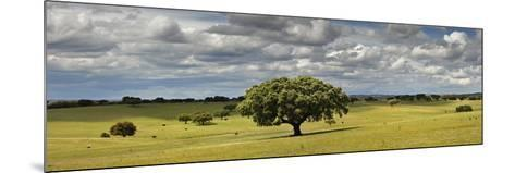 Holm Oaks in the Vast Plains of Alentejo, Portugal-Mauricio Abreu-Mounted Photographic Print