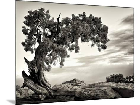 USA, Utah, Dead Horse State Park, Juniper Tree-Mark Sykes-Mounted Photographic Print