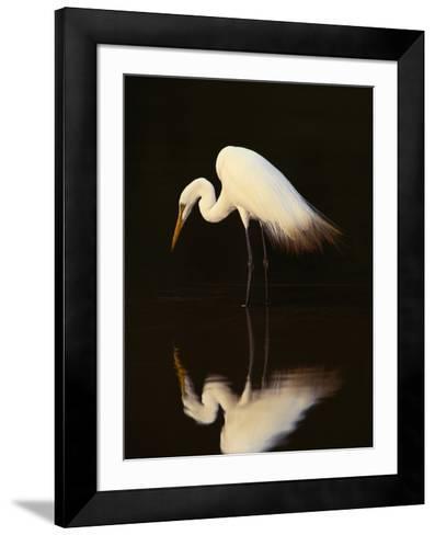 Great Egret in Lagoon, Pantanal, Brazil-Frans Lanting-Framed Art Print